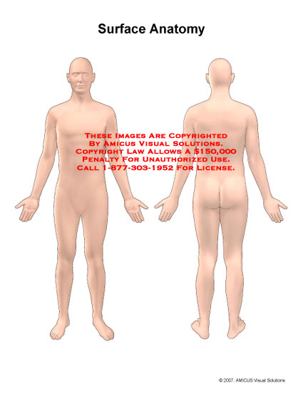 Anterior and posterior views of generic male body.
