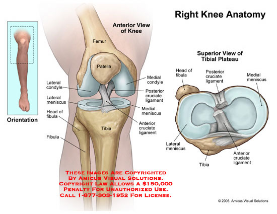Medical diagrams and resources regarding Anterior view of knee joint and superior view of tibial plateau..