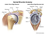 Anterior and lateral view of shoulder joint.