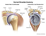 Anterior and lateral view of left shoulder joint.