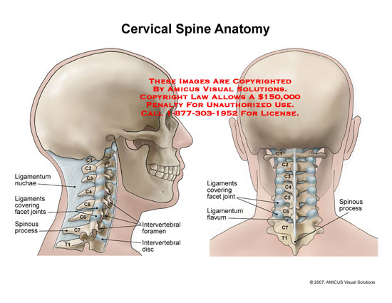 amicus,anatomy,cervical,spine,ligamentum,nuchae,ligaments,facets,joints,intervertebral,foramen,flavum,disc