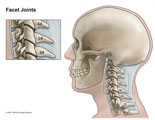 Cervical spine with inset of C3-4 and C4-5 facet joints.