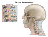 Lateral cervical spine with section through facet joints.