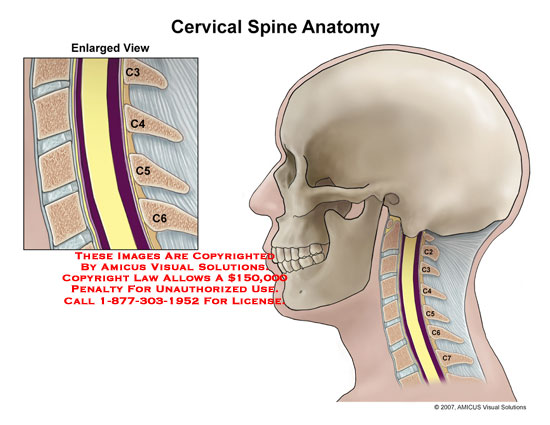 Cervical spinal canal from C3-C6.
