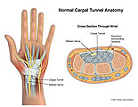 Median nerve shown within normal carpal tunnel.
