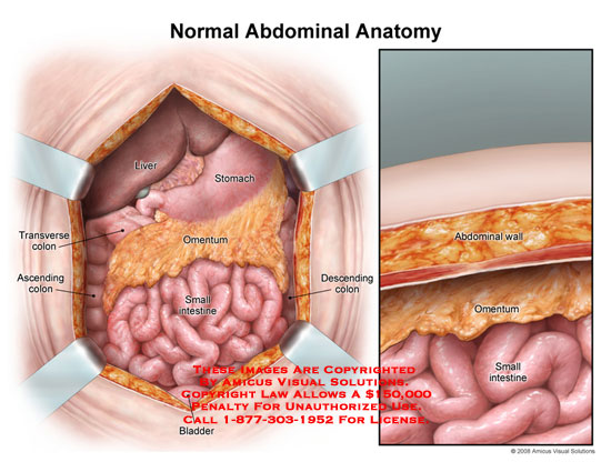 Amicus illustration of amicusanatomyabdominalnormalstomach abdomen opened exposing organs along with sagittal view showing layers ccuart Image collections