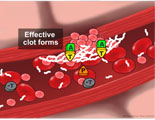 Animated process of normal blood clotting along damaged artery.