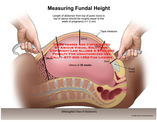Fundal Height  U2014 The Bump
