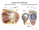 Front view of normal shoulder anatomy with side view of joint opened.