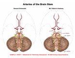 Inferior view of cerebellum with generic and anomalous arteries illustrated.