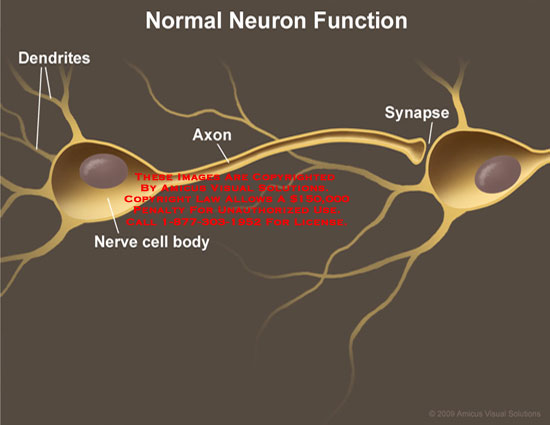 Functional parts of neuron identified.