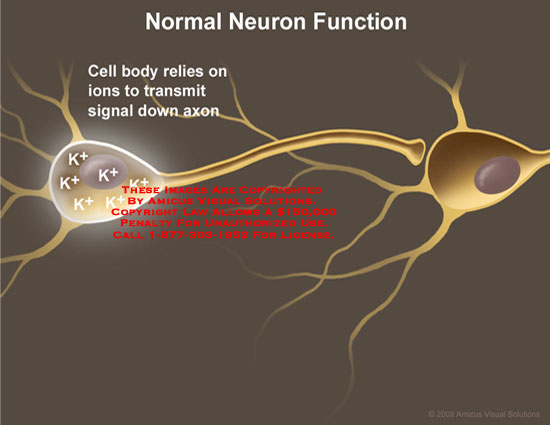 Medical diagrams and resources regarding Potassium ions transmit signal down axon..