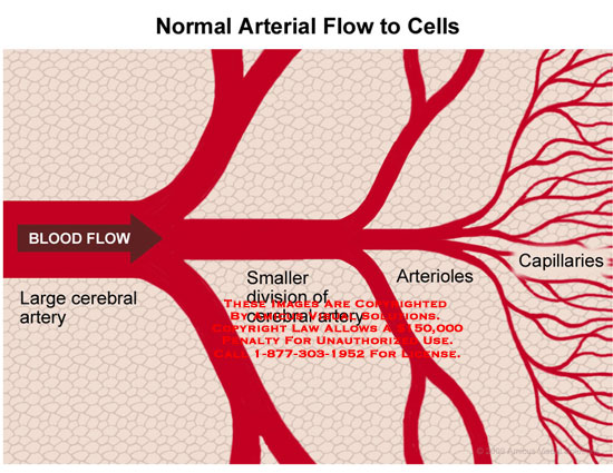 Branching arteries that disperse into capillaries.
