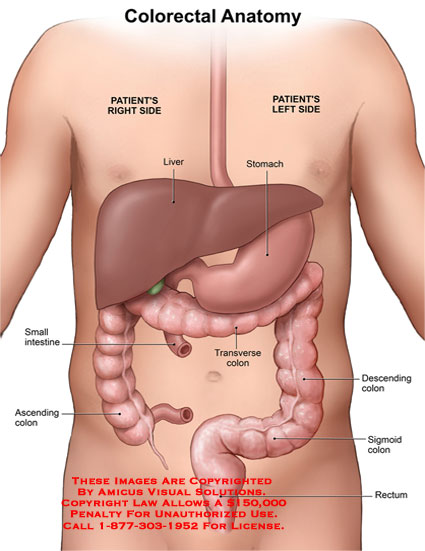 amicus illustration of amicus,anatomy,colorectal,right,left,side, Human body