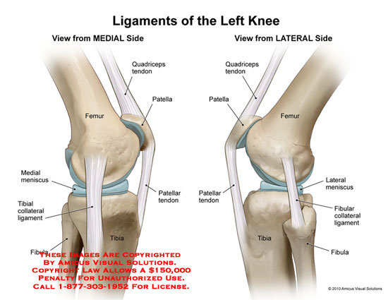 Diagram Of The Left Knee And Ligaments Circuit Connection Diagram