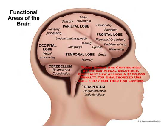 amicus,anatomy,brain,functional,areas,lobe,parietal,sensory,processing,motor,movement,frontal,personality,emotions,planning,organizing,problem,solving,reasoning,temporal,understanding,speech,hearing,language,smell,memory,occipital,visual,cerebellum,balance,coordination,stem,regulates,basic,body,functions