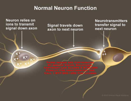 amicus,anatomy,neuron,function,ions,transmit,signal,travels,down,axon,neurotransmitters,transfer