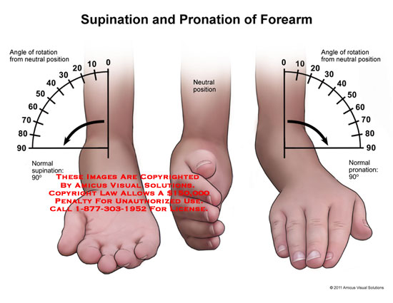 amicus illustration of amicus,anatomy,range,motion,forearm, Human body