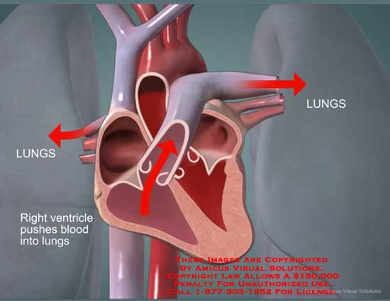 amicus,animation,still,heart,lungs,right,ventricle,push,blood