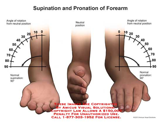 Supination and Pronation of Forearm