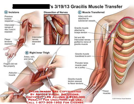 veins looking biceps