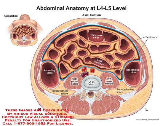 Abdominal Anatomy At L4 L5 Level
