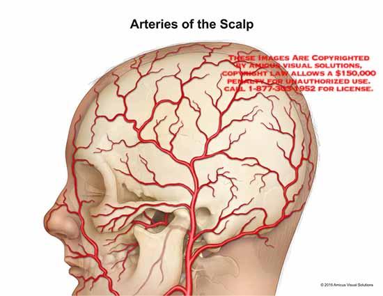artery diagram scalp wiring diagram Lymph Node Diagram arteries of the scalpthumbnails medical diagrams and resources regarding (no description yet)
