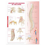 anatchart,chart,anatomy,injury,injuries,spine,spinal,cervical,thoracic,lumbar,column,hyperextension,hyperflexion,spondylolisthesis,burner,stinger,dislocation,vertebra,vertebrae,fracture,burst,compression,spondylosis,herniated,disc