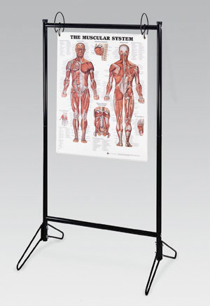 anatchart,stand,display,chart,aluminum,laminated