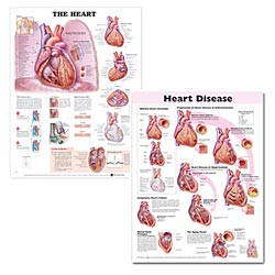 anatchart,chart,hypertension,disease,type,cholesterol,cardiovascular,disease,heart,blood,pressure,poster,laminated,set