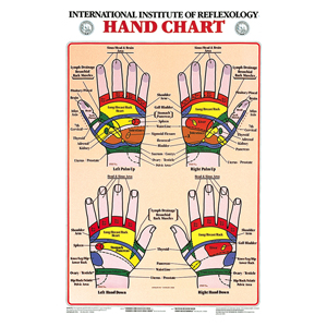 anatchart,chart,hand,reflexology,anatomical,reflexes,corresponding,body,area,laminated