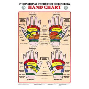 anatchart,chart,hand,reflexology,anatomical,reflexes,corresponding,body,area,laminated