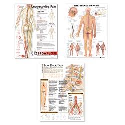 anatchart,chart,nervous,system,nerves,spinal,spine,back,neurology,set,brain,nerves,pain,low,back,poster