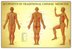 anatchart,chart,acupoint,traditional,chinese,medicine,meridians,points,references,locations,redwing,books
