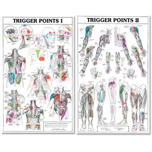 anatchart,chart,trigger,point,paper,unmounted,anatomy