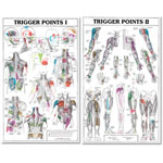 anatchart,chart,trigger,point,paper,unmounted,anatomy